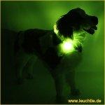 Hunde Leuchthalsb�nder