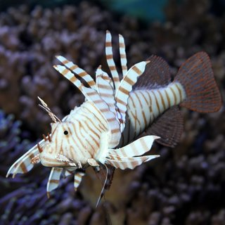 JBL MotionDeco Lionfish*